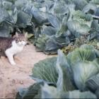 Kot Barsik w gospodarstwie rolnym
