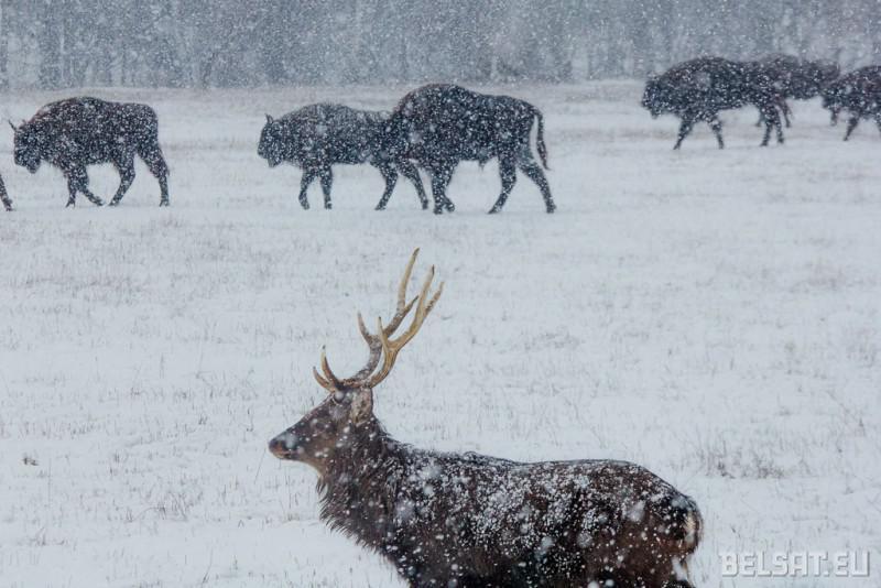 Lyasnya Zhyveliny sustrakayuts zimu u Magileuskim Zaasade_ 02