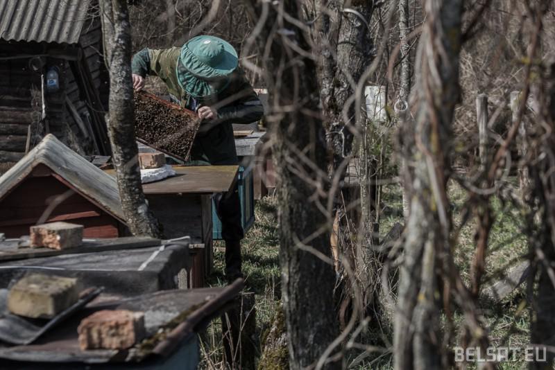 Адзін з пустэльнікаў з вёскі Сілічы аглядае пчаліныя рамкі на сваёй пасецы.