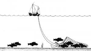 Trawling_Drawing_new